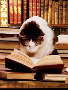 Professor, the intelligent, literate cat