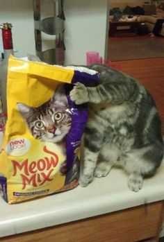 I must eat my way to the bottom~~~~~there is another cat in here, and I have to find it.