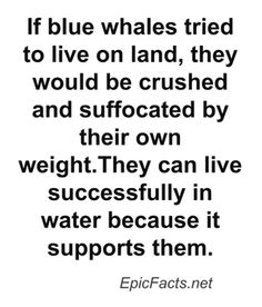 snap (17) Blue Whale, Crushes, Facts, Math Equations, Words, Horse, Truths