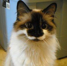 Je veux un chat comme ça !
