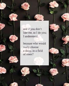 And if you don't like me, as I doyou; I understand because who would really choose a daisy, in a field of roses? Rose Quotes, Lyric Quotes, Sad Quotes, Words Quotes, Inspirational Quotes, Sayings, Lyrics, Status Quotes, Deep Quotes