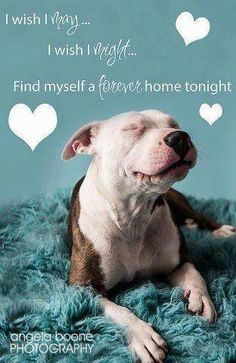 I wsh I may... I wish I might... Find myself a forever home tonight. ~ Save a life... adopt don't shop.