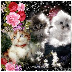 Cute Good Morning, Beautiful Morning, Cute Cats And Kittens, Kittens Cutest, Crazy Cat Lady, Crazy Cats, Lovers Art, Cat Lovers, Valentines Day Cartoons