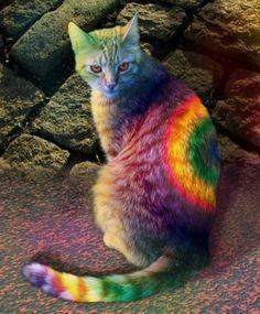 its a rainbow cat haha