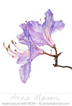 "Rhododendron © 2007 ~ annamasonart.com ~ 23 x 31 cm (9"" x 12"")"
