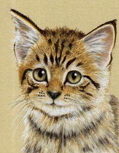 Kitten drawing in pastel pencils