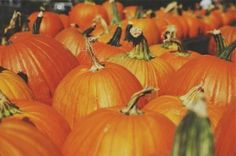 So much to do in Myrtle Beach in the fall. Find great Halloween activities on this blog! And these are all within a short drive of Plantation Resort. Reserve your stay with us by calling 1-800-845-5039