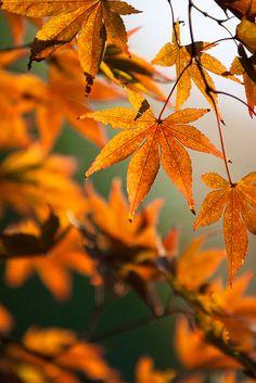 Butterscotch autumn leaves