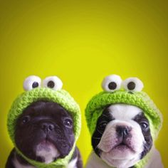 Crochet Hats! For dogs lol!