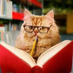 Cute cat wearing glasses and reading a book :))) Funny Cats, Funny Animals, Cute Animals, Crazy Cat Lady, Crazy Cats, I Love Cats, Cool Cats, Kittens Cutest, Cats And Kittens