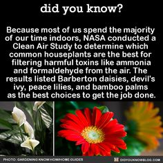 "awkward-ravby: "" did-you-kno: "" Because most of us spend the majority of our time indoors, NASA conducted a Clean Air Study to determine which common houseplants are the best for filtering harmful..."
