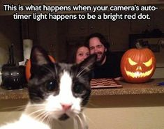 Funny cats - part funny cat image, best cute cat pictures Animals And Pets, Funny Animals, Cute Animals, Baby Animals, Crazy Cat Lady, Crazy Cats, Cat Shaming, Lol, Funny Animal Pictures