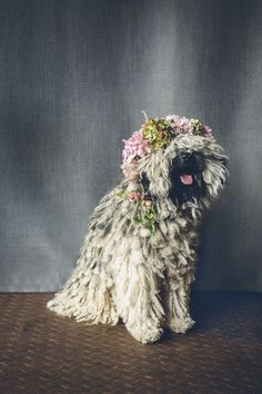 Fluffy + Fab: http://www.stylemepretty.com/collection/3240/ | Photography: I Heart Weddings - http://iheartweddings.com.au/