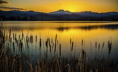 Cattails (Typha) at Sunset by Steve Miller / Picfair