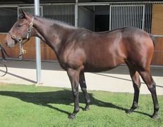 Hot Mama Hot Mama had one start at Echuca in the Spring where she knocked off a $300,000 filly trained...