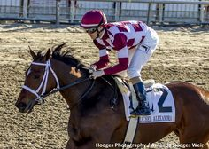 Farrell with jockey Channing Hill aboard wins the 37th running of the Grade II Rachel Alexandra Stakes at Fair Grounds.