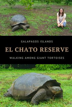 Galapagos Islands - El Chato Reserve http://www.southamericaperutours.com/southamerica/12-days-wonders-of-machu-picchu-and-galapagos.html