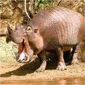Rhinamadillo Hippo