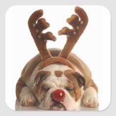 Precious puppy stickers for all your holiday correspondence. Great Christmas stickers for your stocking stuffers. Christmas Animals, Christmas Baby, Christmas Sleighs, Christmas Stickers, Christmas Images, Christmas Time, Christmas Cards, Holiday Gifts For Men, Bulldogs Ingles