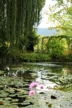 Monet's garden in Giverny.  Will be able to take this off the Bucket List in June!