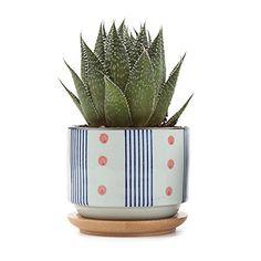 T4U 3 Inch Ceramic japanese Style Serial No.5 succulent P... https://www.amazon.com/dp/B01HB6QI4W/ref=cm_sw_r_pi_dp_x_rHJLybKE0YD0G