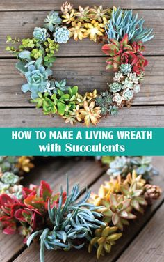 How to Make a Living Wreath with #Succulents