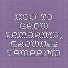 How to Grow Tamarind, Growing Tamarind