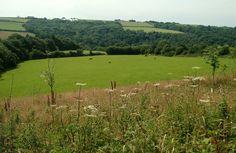Mole Valley Green Burial Ground, near South Molton, Devon.