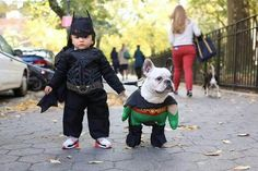 We fell in LOVE with this fan photo of our toddler Dark Knight Rises Batman costume and the classic Robin pet costume from on an adorable French bulldog . Best Kids Costumes, Dog Costumes, Halloween Costumes, Happy Halloween, Halloween Ideas, Costume Ideas, Halloween Camera, Halloween Rules, Batman Halloween