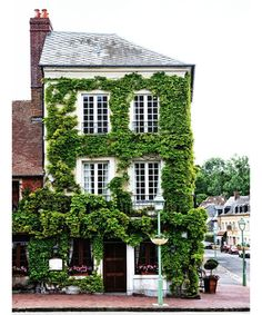 Ivy-Covered Architecture - DuJour