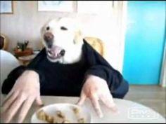 Funny Dog - Enjoys Dinner for One