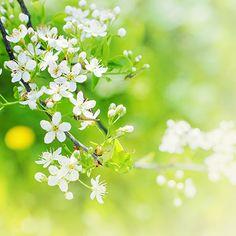 Garden Green Branch