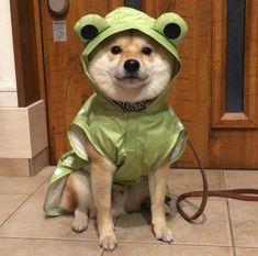 - Adorable Shiba Inu in a frog raincoat – astonishing dog photos , pictures frame , pictures of dog , with pet , pictures Animals And Pets, Baby Animals, Funny Animals, Cute Animals, Dog Icon, Cute Frogs, Cute Creatures, Cute Puppies, Shiba Inu Puppies