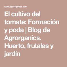 El cultivo del tomate: Formación y poda  | Blog de Agrorganics. Huerto, frutales y jardín