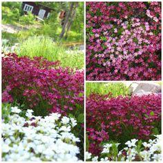 Patjarikko ja Hopeahärkki Backyards, Garden Inspiration, Gardens, Outdoors, Plants, Fun, Backyard, Planters, Outdoor