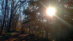 Oh the sun....what a beautiful sight.  #beautifuloutside  #pennsylvania #lifeinthevalley #lovenature #river #naturephotography #sunrays #sun #earlymornings by cheriematassa