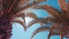 Reposting @deniszja.s: vacay mood 🍍💛 #relax #palm #palmtrees #vacay #travel #traveller #travelgram #sunny #beach # island #mallorca #calador #summer #vibes #holidays #summervibes #vacaymood #happy #traveling #aroundtheworld #seetheworld Sunny Beach, Summer Vibes, Palm Trees, Plant Leaves, Traveling, Around The Worlds, Relax, Mood, Island