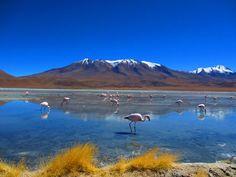 Flamingos wading at Laguna Hedionda, Bolivia. Hedionda, hideous? It looks beautiful to me...  Phil Morris of Wilmslow, Cheshire
