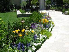 Plants, Lilac, Low Maintenance Garden, White Flowers, Garden Plants, Concept, Planters, Plant, Planting