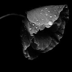 newthom:  highly sensitive beauty………………….