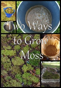 How to grow moss must try very soon.