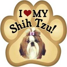 Wish this was a black/white Shih Tzu. Shih Tzu Dog, Shih Tzus, Dog Love, Puppy Love, Printed Magnets, Yorky, Print Packaging, Dog Treats, Best Dogs