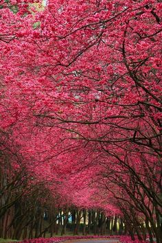 Pink. Petals. Everywhere.