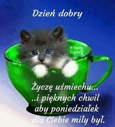 Green color splash cup with a blue-eyed kitten Cute Kittens, Cats And Kittens, Animals And Pets, Baby Animals, Funny Animals, Cute Animals, Funny Cats, Pretty Cats, Beautiful Cats