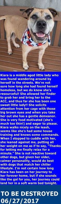 PASSED AWAY DUE CANCER 08/24/2017 --- SAFE 06/28/17 --- SUPER URGENT Brooklyn Center KIARA – A1115129  FEMALE, BROWN, AM PIT BULL TER MIX, 8 yrs STRAY – STRAY WAIT, NO HOLD Reason STRAY Intake condition EXAM REQ Intake Date 06/12/2017,   http://nycdogs.urgentpodr.org/kiara-a1115129/