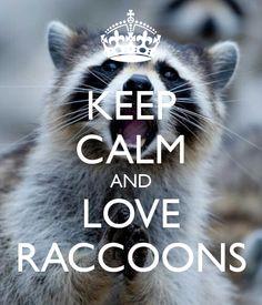 Keep calm and LOVE Raccoons! ❥