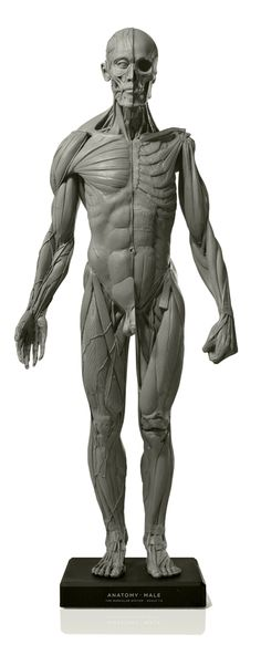 Male figure: Art-pro v2A