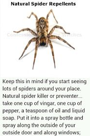 Herbal Health Care: Spider-Repellent Recipes also for scorpions, fleas, ticks, flies & roaches!