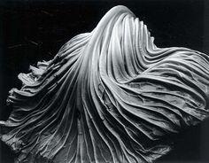 Nome: Edward Weston