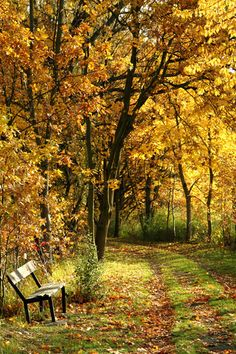 'bench in the autumn park as nice natural background༺ ♠ ŦƶȠ ♠ ༻'
